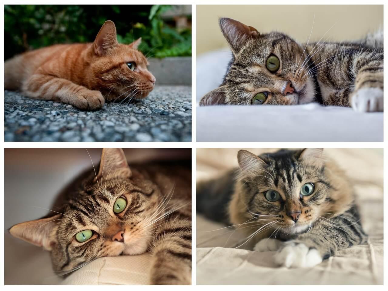 На фото изображены коты и кошки (часть 2).