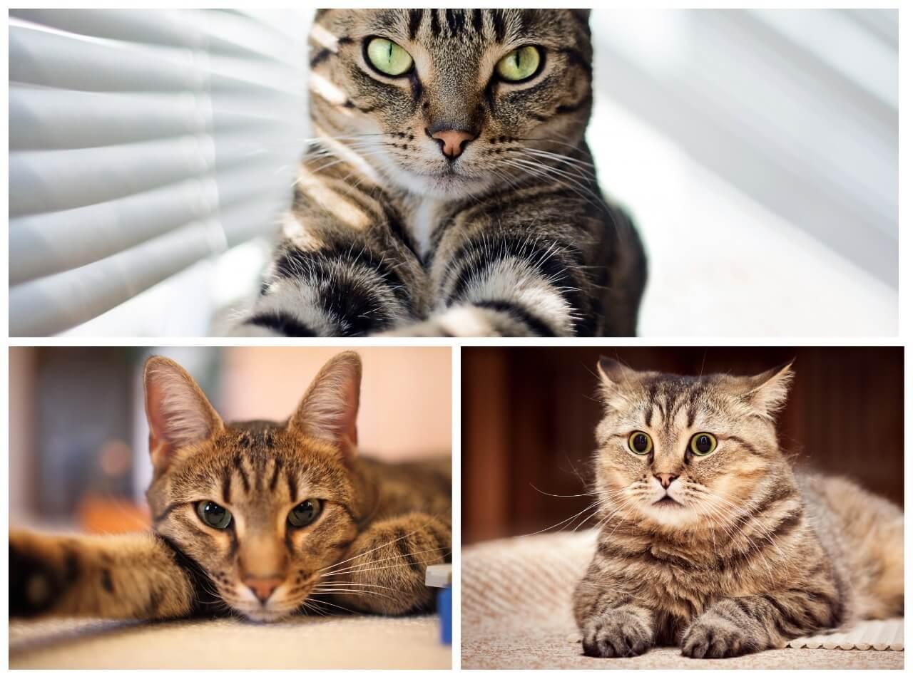 На фото изображены коты и кошки (часть 3).