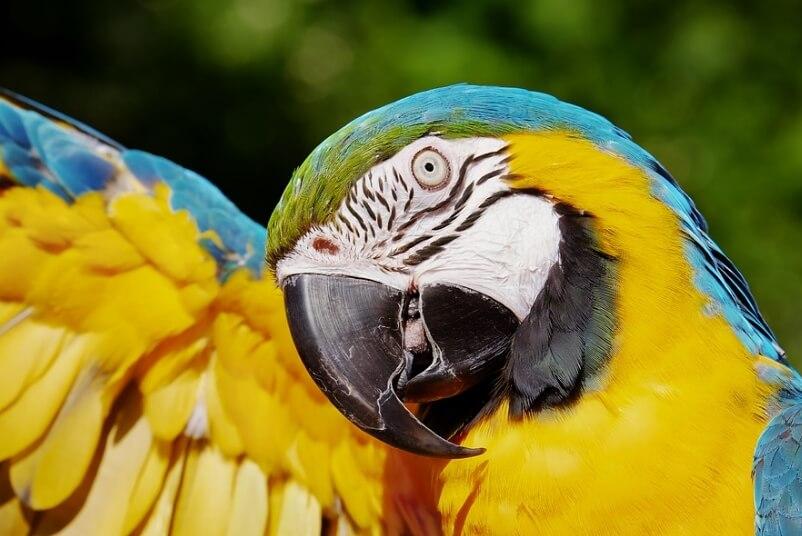 На фото красивый попугай.